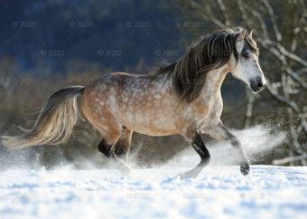 RW25---Konie-w-obiektywie---01
