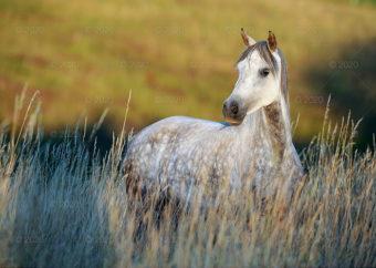 RW25---Konie-w-obiektywie---03