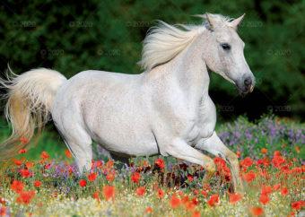 RW25---Konie-w-obiektywie---07