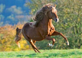 RW25---Konie-w-obiektywie---09