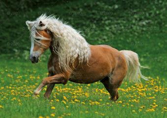 RW25---Konie-w-obiektywie---11