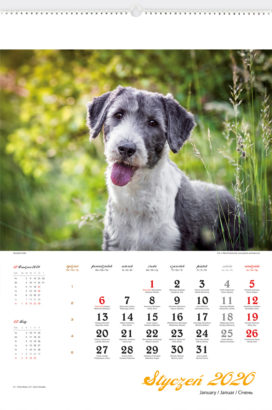 RW26 - Psy rasowe - kalendarium