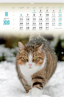 RW27 - Koty domowe - kalendarium
