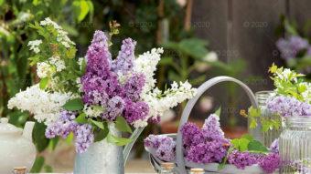 WN03---Kompozycje-kwiatowe---05