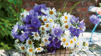 WN03---Kompozycje-kwiatowe---11